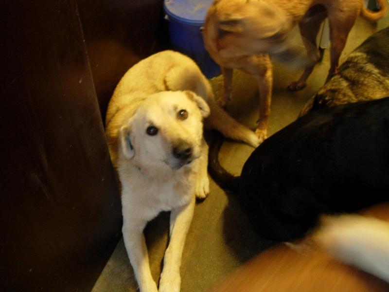Pongo, chien des rues, né en 2009, très affectueux !! Dscn9015