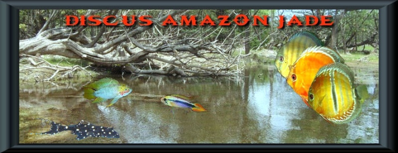 DISCUS AMAZON JADE