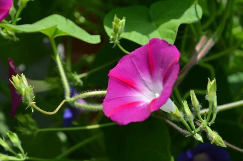 Mon carré potager: vivement la récolte! Image25
