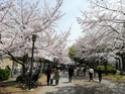 Le JAPON : Discussions générales, voyages, conseils, aides,... Img_2010