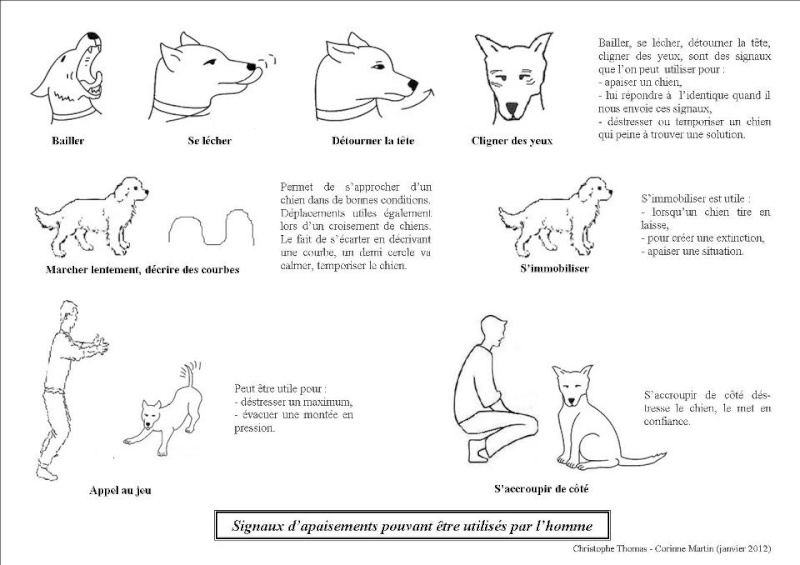 Signaux d' apaisement chez le chien Signau10