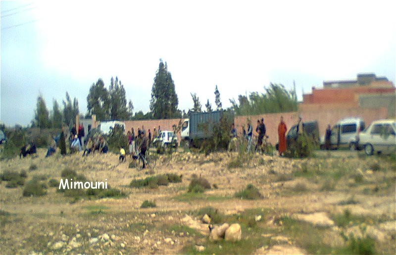 Ouled Mimoune renoue  avec Le cheval et les arts équestres  (Tbourida) Photo013