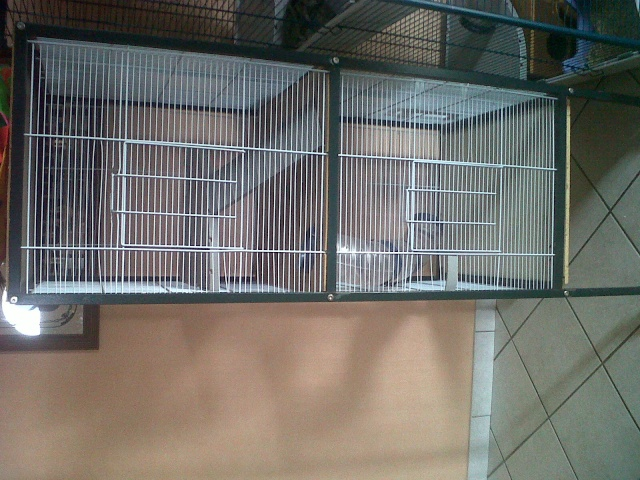 donne cage Cage10