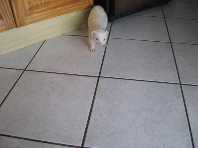 [Décédé] Donut, mâle albinos - Page 5 Img_2010