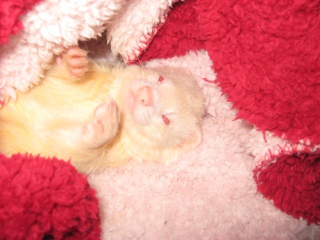 [Décédé] Donut, mâle albinos - Page 5 Img_2029