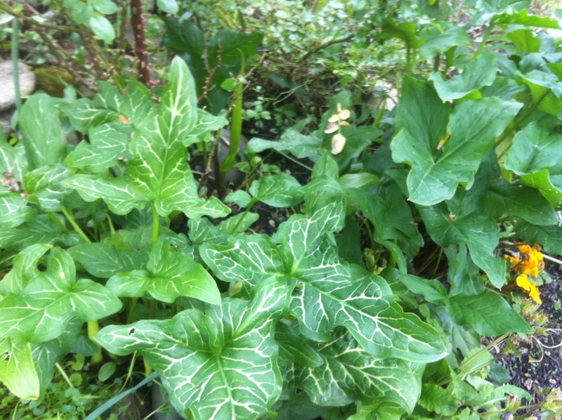 Plante à identifier Img_2819
