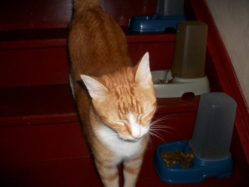 Filou, beau male de 3 ans  (réservé par laurie ) Imgp3210