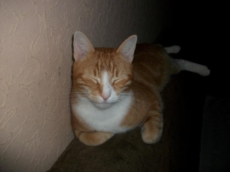 Filou, beau male de 3 ans  (réservé par laurie ) Imgp3212
