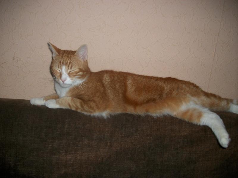 Filou, beau male de 3 ans  (réservé par laurie ) Imgp3232