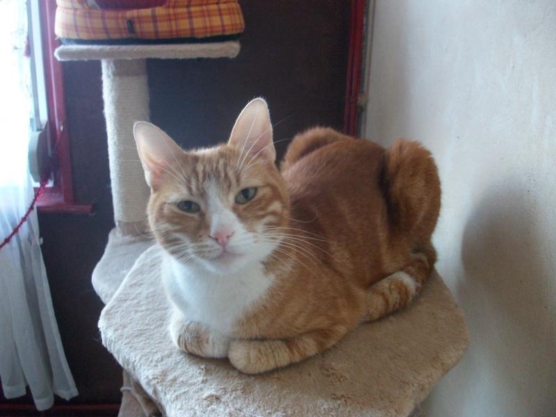 Filou, beau male de 3 ans  (réservé par laurie ) Imgp3336