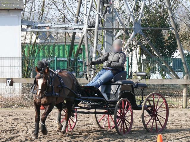 Les relais téléphoniques et les chevaux ? P1190710