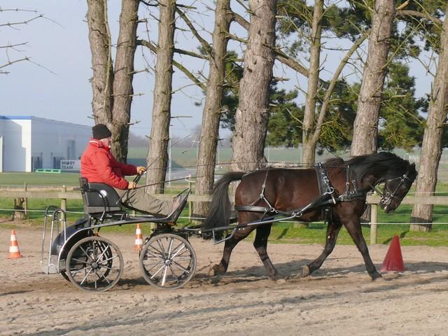 Les relais téléphoniques et les chevaux ? P1190810