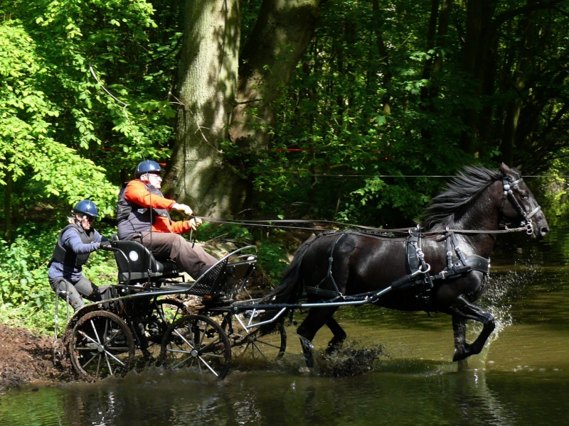 4 Mai 2014 - Journée d'attelage de l'AASM, dans le parc du chateau de Tourville les Ifs P1420810