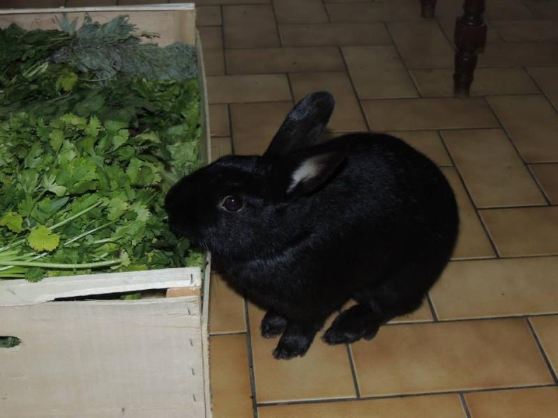 Olive, lapine noire, jeune - Page 23 14834310
