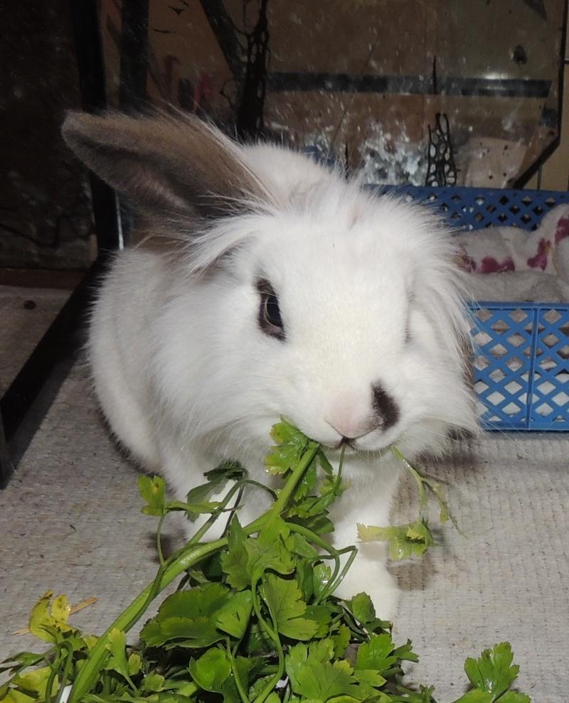 Olive, lapine noire, jeune - Page 23 Dscn0410
