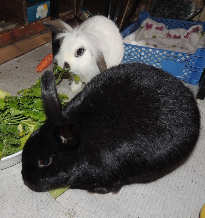 Olive, lapine noire, jeune - Page 23 Dscn0411