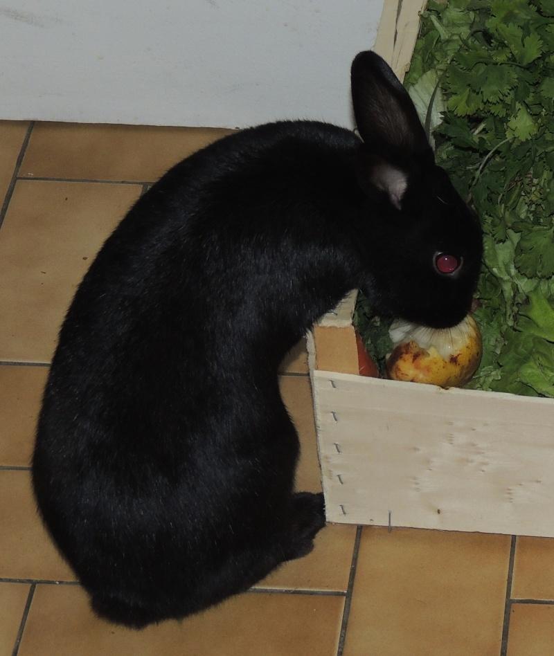 Olive, lapine noire, jeune - Page 23 Dscn0710