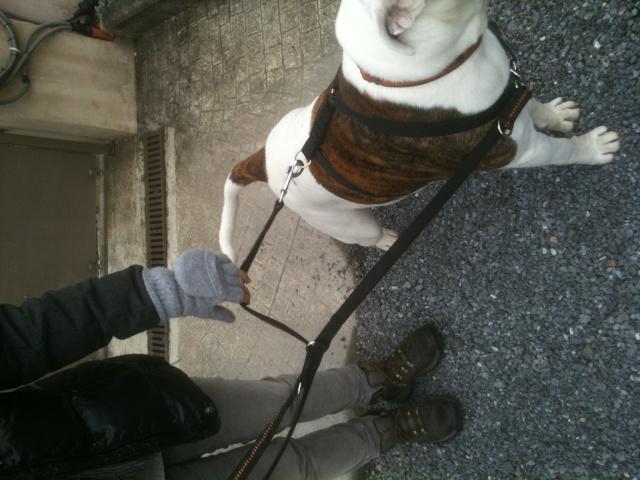 Rappel et chien réactif avec ses congénères - Page 3 Harnai10