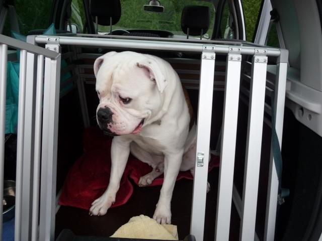 Transport en voiture des chiens et chats - Page 8 P1130624