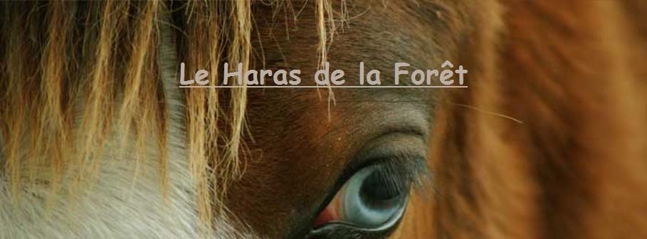 Le Haras De La Forêt