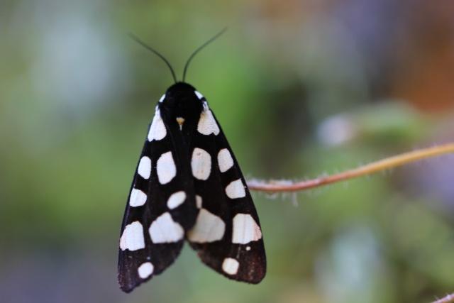 Farfalle    Img_6610