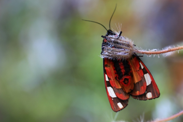 Farfalle    Img_6710