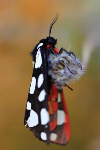 Farfalle    Img_6910