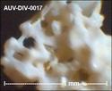 microfossiles divers d'Auvers sur Oise ( suite) Auv-di30