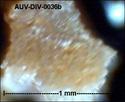 microfossiles divers d'Auvers sur Oise ( suite) Auv-di52