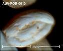 Microfossiles d'Auvers sur Oise Auv-fo25