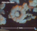Microfossiles divers de FERCOURT (60) Fer-di14