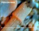 Microfossiles divers de FERCOURT (60) Fer-di15