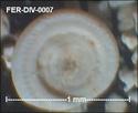 Microfossiles divers de FERCOURT (60) Fer-di16