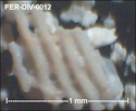 Microfossiles divers de FERCOURT (60) Fer-di23