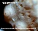 Microfossiles divers de FERCOURT (60) Fer-di47