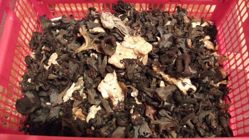 Rubrique mycologique - Page 15 Racolt10