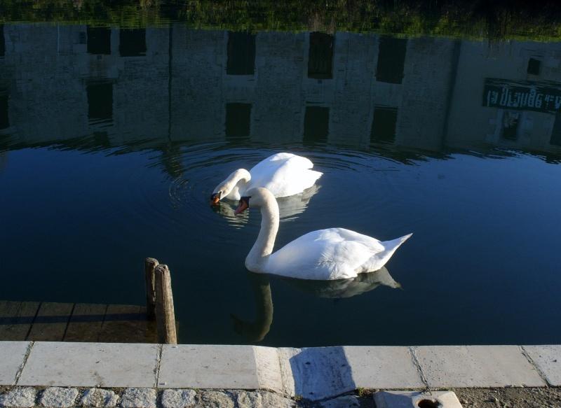 36 - Les reflets dans les flaques d'eau........ photos reçues !!! S1058110