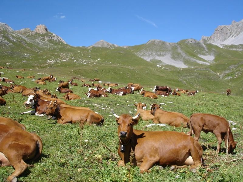 La faune en Haute-Tarentaise Dsc03316