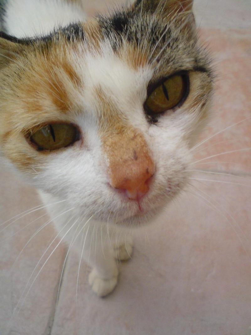 Pet's photos Dsc00610