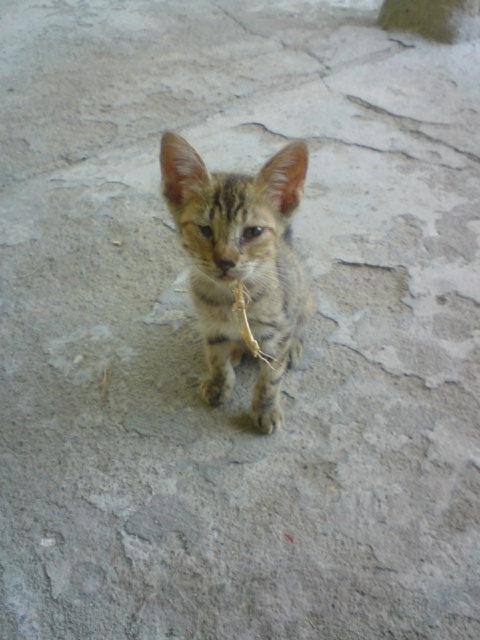 Pet's photos Dsc02310