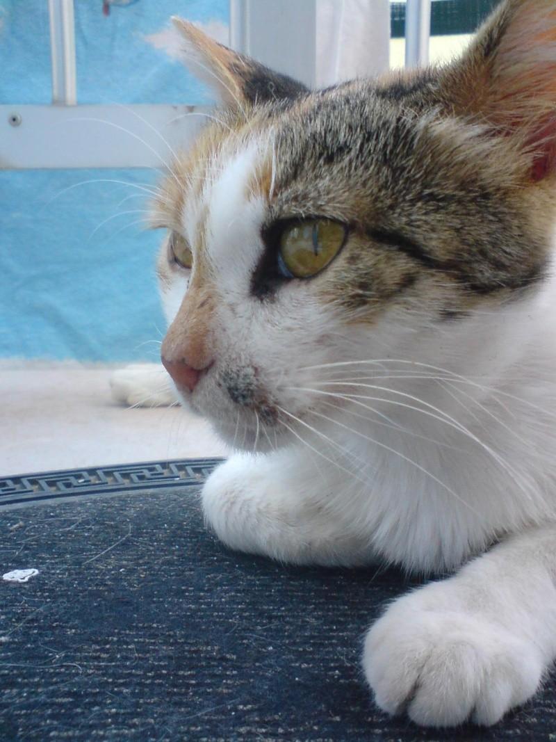 Pet's photos Makri10