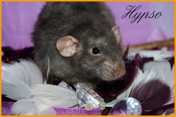 IND Hypso * PEX-LPM Sarabi Hypso10