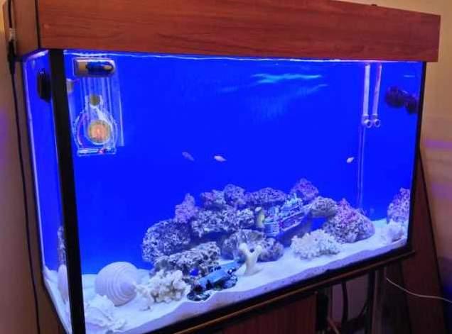 Hola a todos me presento: José Durán y mi acuario marino Acuari10