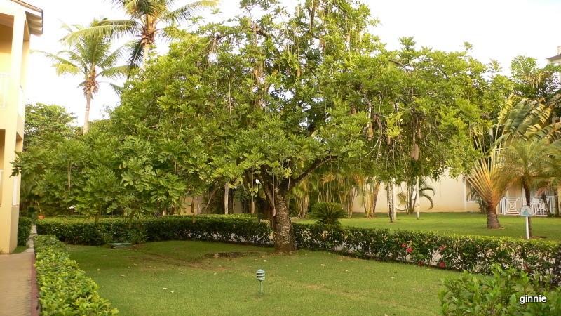 Flore de la République Dominicaine à identifier 073-p110
