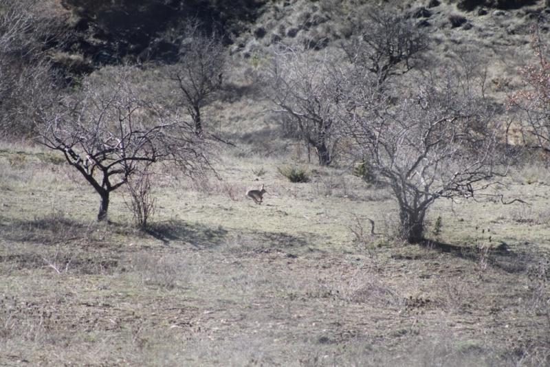 Brevet de chasse Sainte Jalle le 22 & 23 février 2014 Img_4418