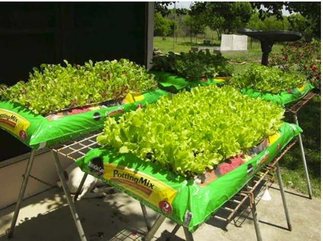 The Perfect Garden For Those With Disabilites Bag_ga11