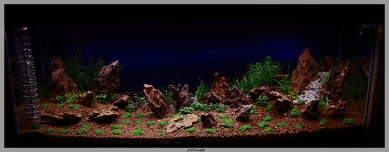 aquascaping - Page 2 Img_0510