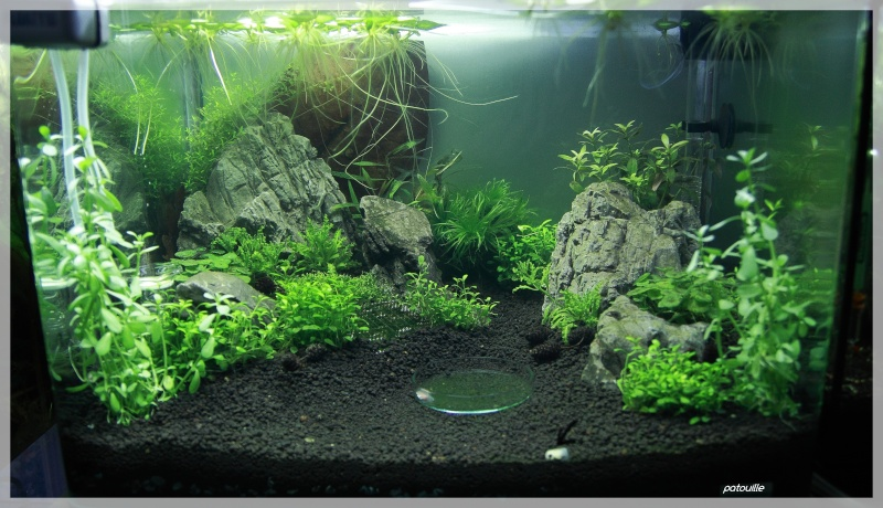 aquascaping - Page 2 Img_0511