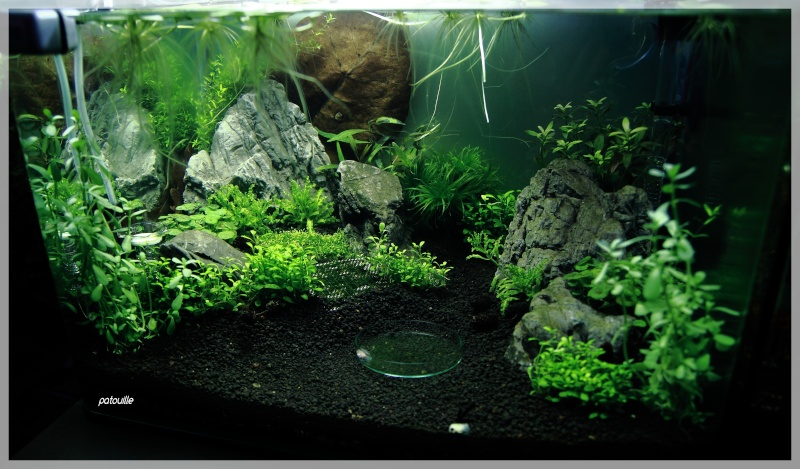 aquascaping - Page 2 Img_0512