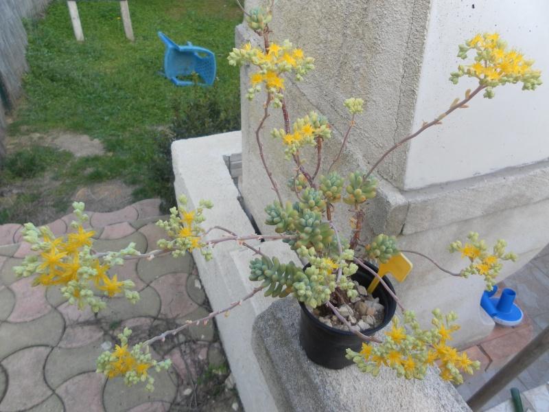 bientot des fleuraisons Sam_1010